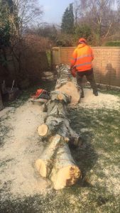 Tree Surgeon Leeds | West Yorkshire Tree Services