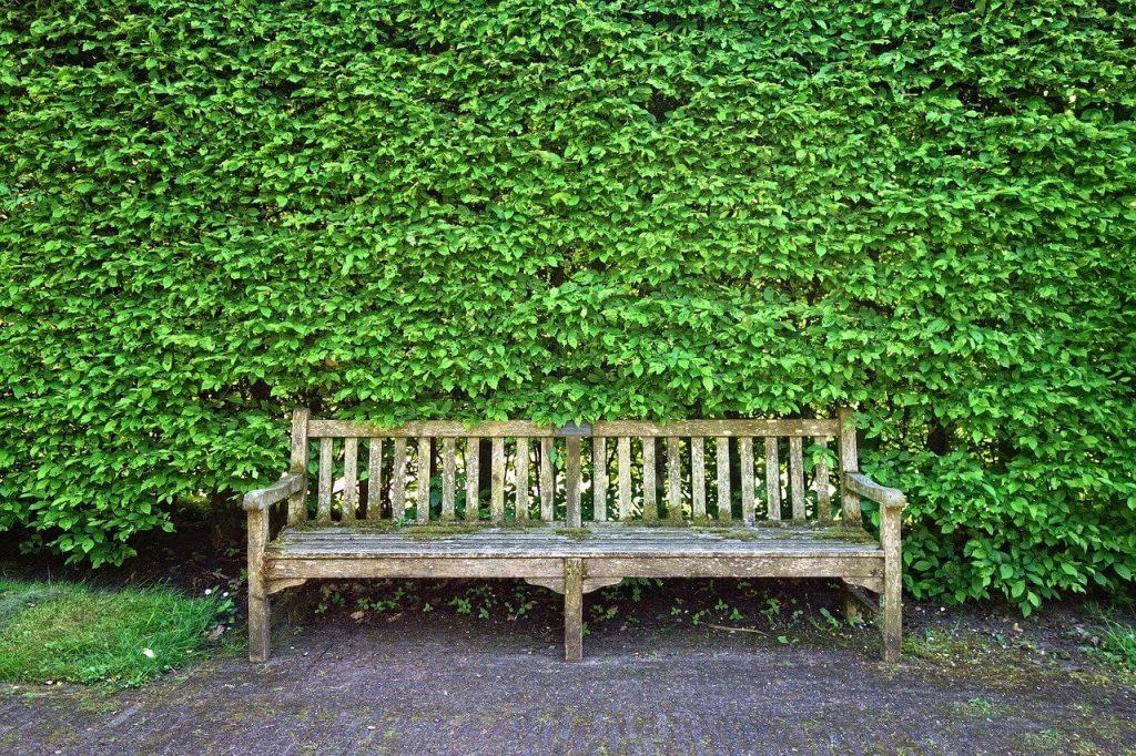 hedge trimming leeds